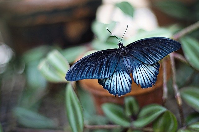 One of the classic postures of yoga: The butterfly. Learn how to perform it and its benefits.